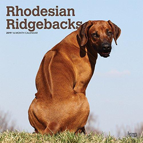 Rhodesian Ridgebacks 2019 12 x 12 Inch Monthly Square Wall Calendar, Animals Dog Breeds (Multilingual Edition)