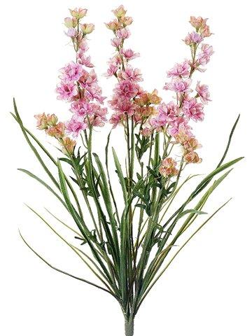 245-Delphinium-Bush-x3-Pink-Cream-Pack-of-12