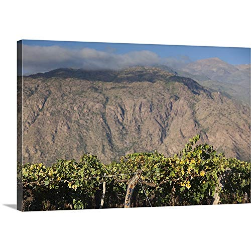 GREATBIGCANVAS Gallery-Wrapped Canvas Entitled Crop in a Vineyard, Cafayate, Calchaqui Valleys, Salta Province, Argentina by 18