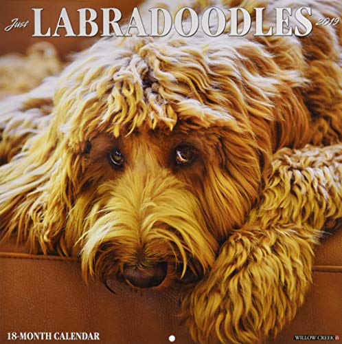 Just Labradoodles 2019 Wall Calendar (Dog Breed Calendar) for sale  Delivered anywhere in USA