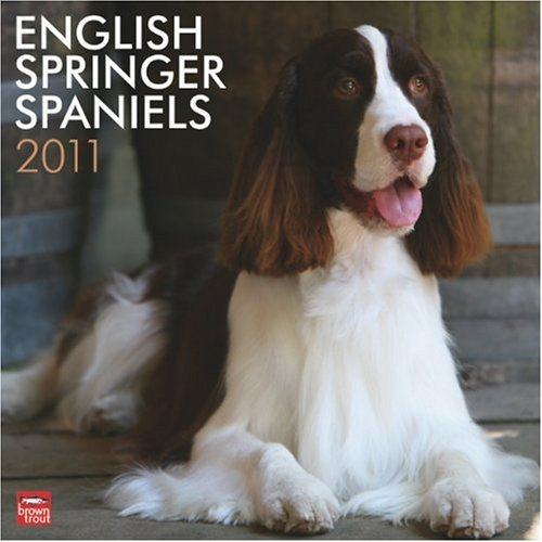 English Springer Spaniels 2011 Square 12X12 Wall by BrownTrout Publishers Inc (2010-08-01)