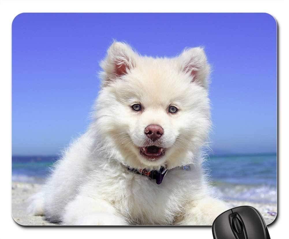 犬マウスパッド 1120-010 260*210*3 mm B07KPWR7GV Fl26 300*250*3 mm 300*250*3 mm|Fl26