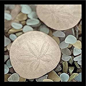 51j4kY4QxzL._SS300_ Best Sand Dollar Wall Art and Sand Dollar Wall Decor For 2020