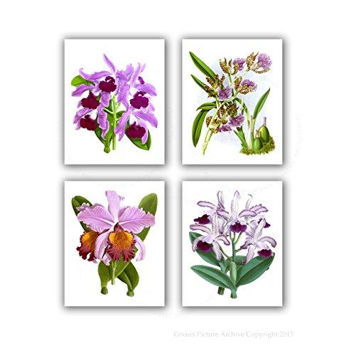 Orchid Botanical Prints Set of 4 Unframed Orchid Flower Art Living Room Wall Decor ()