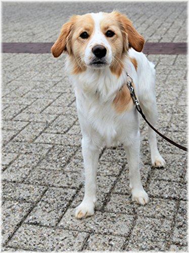 Home Comforts LAMINATED POSTER Cute Dog 1 Animals Poster Pri