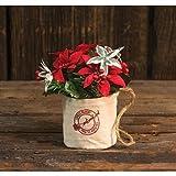 Heart of America Mini Poinsettia In Hanging Bag