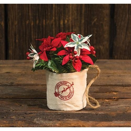 Heart of America Mini Poinsettia In Hanging Bag