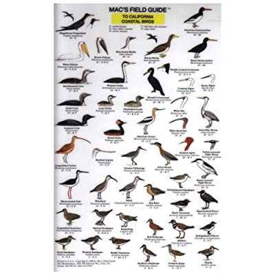California Coastal Birds (Mac's Guides (Flash Cards)): Craig MacGowan: Office Products