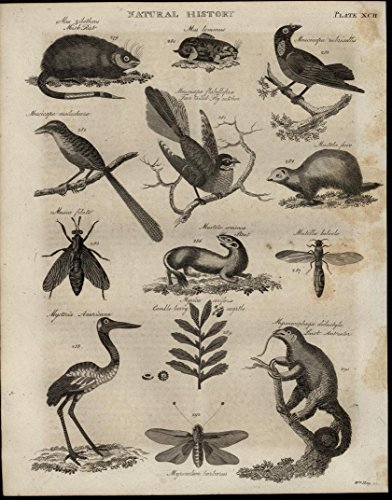 Ferret Anteater Stork Insects 1821 engraved antique print ()