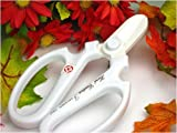 【超限定色】ハンドクリエーションF170 フッ素樹脂 超プレミア色 クリスマスホワイト