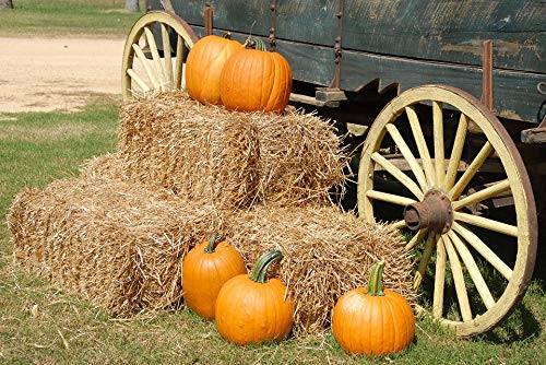 Home Comforts Acrylic Face Mounted Prints Wagon Halloween Farm Orange Fall Pumpkins Autumn Print 14 x 11. Worry Free Wall Installation - Shadow Mount is -