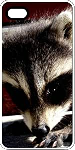 Baby Raccoon Clear Plastic For SamSung Galaxy S5 Case Cover