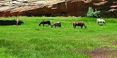 Southwest Desert Horse Pasture Seed Blend