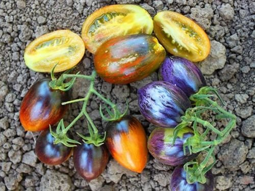 30 Brad's Atomic Grape Tomato Seeds 2018 (All Non-GMO Heirloom Vegetable - Tomato Grape Plants