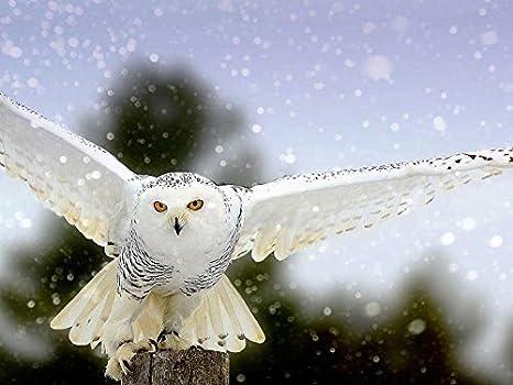 D Snow Owl Art Print Home Decor Wall Art Poster