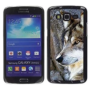 Caucho caso de Shell duro de la cubierta de accesorios de protección BY RAYDREAMMM - Samsung Galaxy Grand 2 SM-G7102 SM-G7105 - Wol Wild Tree Nature Dog Animal Brown