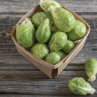 David's Garden Seeds Brussels Sprouts Dagan O3633 (Green) 25 Organic Hybrid Seeds