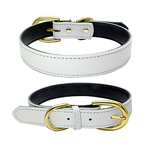 - Benala Gold Buckle Genuine Leather Pet Collar Inside Padded Leather Puppy Cat Pet Dog Collar White,S