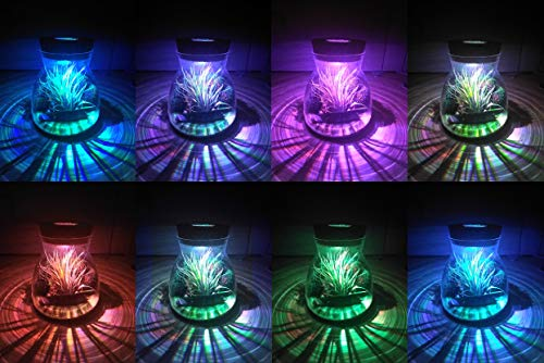 NW Wholesaler - Conical Glass Lighted Terrarium with Live Tillandsia Air Plant - Multi Color Illuminating Light Display Changes Air Plants Color! (Green Sand) by NW Wholesaler