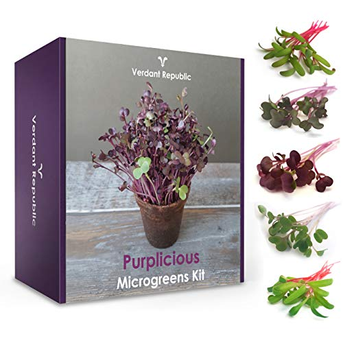 Grow Your Own SUPERFOOD – PURPLICIOUS MICROGREENS KIT | Sprouting Seeds Beginners Gardening Set | Easy-to-Grow…