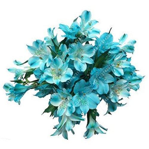 (100pcs/bag Alstroemeria seeds Peruvian Lily Alstroemeria Inca Bandit - Princess lily bonsai flower seeds planta for home garden 14)
