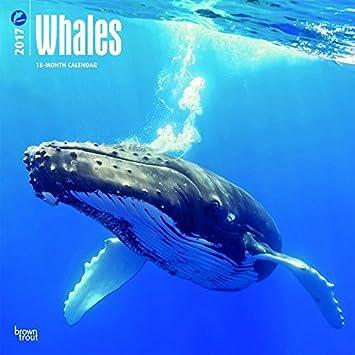 Calendario 2017 ballena - mammifere Marino - cetace - Ocean ...
