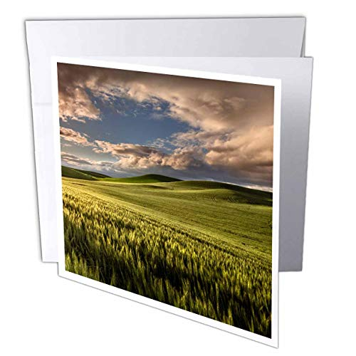3dRose Danita Delimont - Farms - Rolling Hills of Wheat, Palouse Region of Eastern Washington State. - 6 Greeting Cards with envelopes (gc_315083_1)