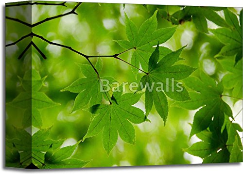 Green Maple Leaves Background Paper Print Wall Art Gallery Wrapped Canvas Art (8in. x 10in.) Barewalls Leaf