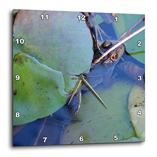 3dRose Stamp City - animals - Photograph of frog hiding under lily pad in a pond. - 13x13 Wall Clock (dpp_289772_2) - Pad Lily Display Frog
