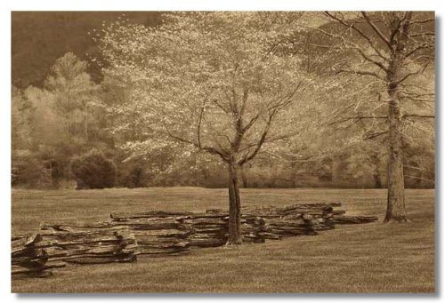 Smokies Fence by Wendy Caro Museum Wrapped Canvas Art Print 24 x 18 Inches on (Smokies Fence)