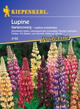 Saat Lupinus polyphyllus Lupinen-Mischung Gartenzwerg