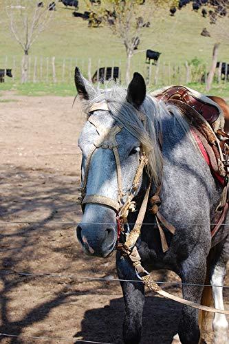 (Photography Poster - Horse, Estancia, Cordoba, Argentina, 24