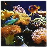 3dRose cst_84836_3 Salt Water Aquarium, Vitu