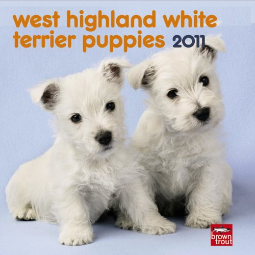 West Highland White Terrier Puppies 2011 7X7 - Terrier Puppies 2010 Calendar