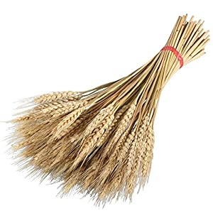 Wedding Decorations Dried Wheat Sheaves,100pcs Natural Wheat Bouquet Bunch Stalk Bundle,Bride and Groom Holding Flowers,DIY Home Kitchen Table Wedding Centerpieces (a) 3