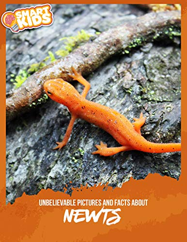 Unbelievable Pictures and Facts About Newts