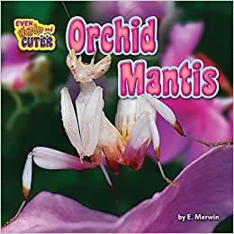 Orchid Mantis Even Weirder And Cuter Merwin E 9781684024629