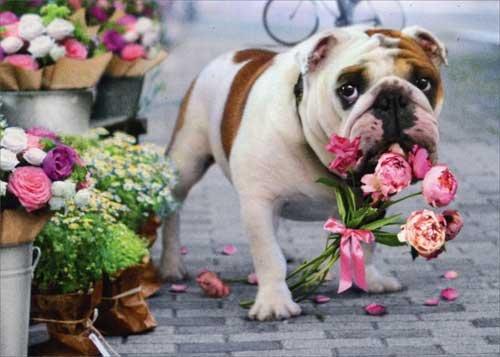 Bulldog & Flower Bouquet Get Well Soon Card Avanti Press