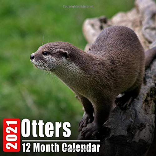 Pictures of Otter Calendar 2021