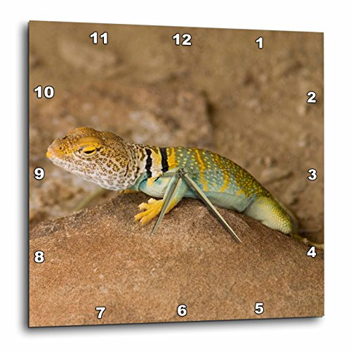 3dRose dpp_92616_1 Collared Lizard, Chaco Culture Park, New Mexico-Us32 Hga0004-Howie Garber-Wall Clock, 10 by (Lizard Clock)