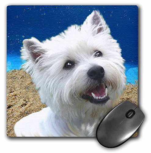 3dRose LLC 8 x 8 x 0.25 Inches Mouse Pad, West Highland Terrier (mp_4436_1)