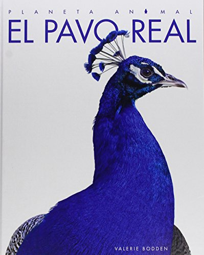 El pavo real / The Peacock (Planeta Animal) (Spanish Edition) by Creative Educ