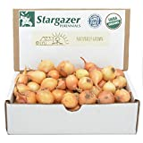 Stargazer Perennials Yellow Stuttgarter Onion Sets 8 oz | Organic Non-GMO Bulbs - Easy to Grow