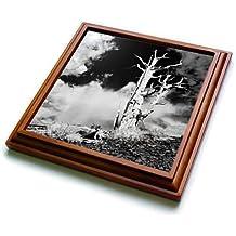 3dRose Danita Delimont - California - California, White Mountains. Bristlecone pine tree in black and white. - 8x8 Trivet with 6x6 ceramic tile (trv_278527_1)