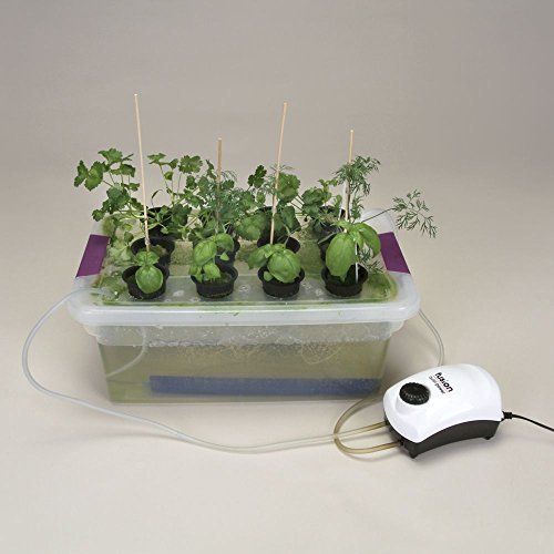 Visual Desktop Hydroponics (Carolina Student Desk)