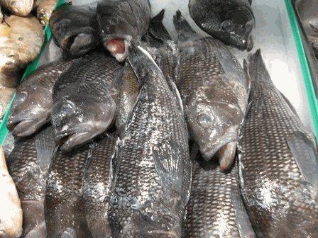 Fresh Virginia Beach Black Sea Bass 6 Lb. Avg