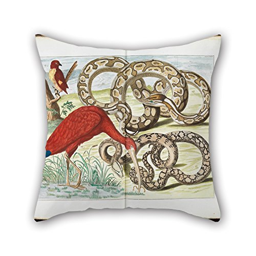 Beautifulseason Oil Painting Albertus Seba - Red Ibis, Eudocimus Ruber Throw Pillow Covers 16 X 16 Inches / 40 By 40 Cm Best Choice For Teens,her,relatives,home Theater,dinning Room With Twice Side