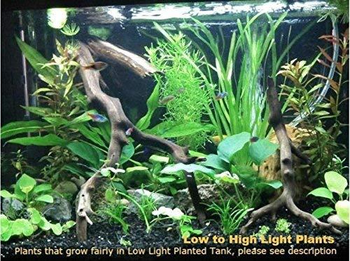Low to High Light Collection 1, Live Aquarium Plants Plus FREEbies, Please Read Description