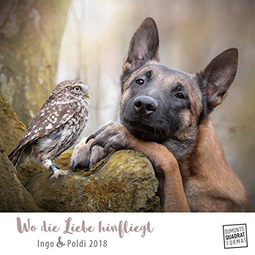 Wo die Liebe hinfliegt 2018 – Ingo & Poldi – Freundschaft von Schäferhund und Steinkauz - Wandkalender mit Spiralbindung – DuMont Quadratformat 24 x 24 cm