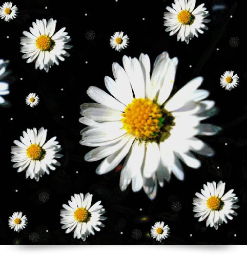 Sunshine In Your Home (Giclee Art Print), Pepita Selles